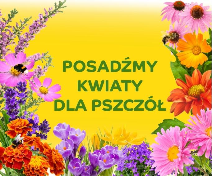 milion kwiatow